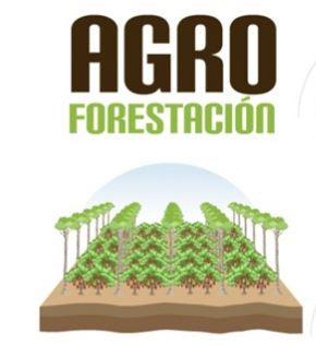 AGRO FORESTACIÓN