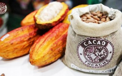cacao770x420